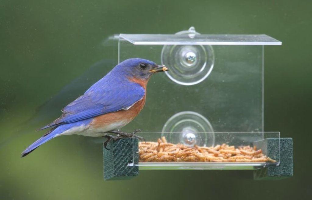 Get Tempting Treats For Birds