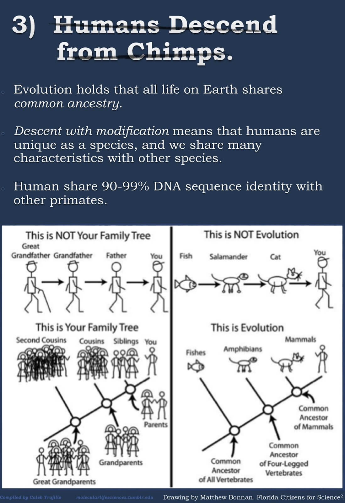 The myths about evolution3